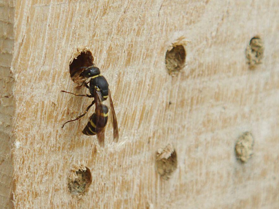 Fabelhaft Insektenhotel - BUND Naturschutz in Bayern e.V. #XI_49