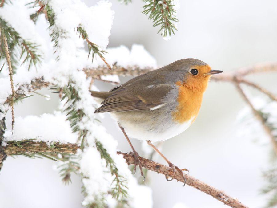 Vogelfutterung Bund Naturschutz In Bayern E V