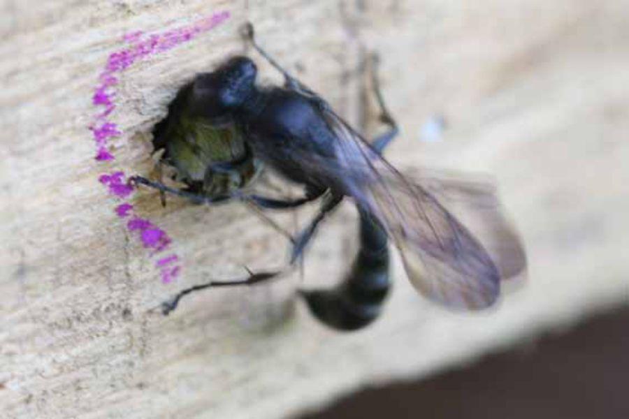 Beliebt Bevorzugt Insektenhotel - BUND Naturschutz in Bayern e.V. &DZ_54