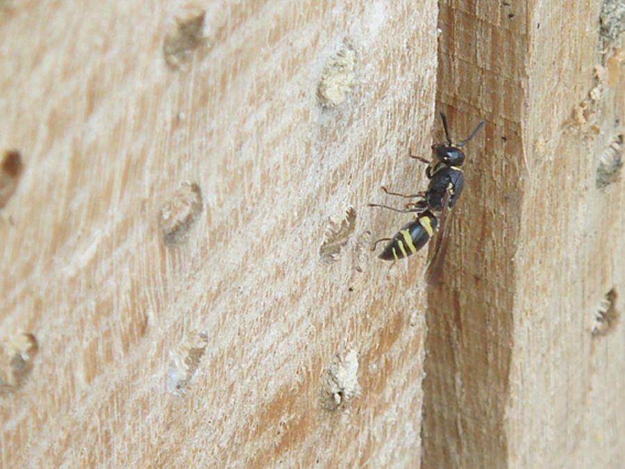 Geliebte Insektenhotel - BUND Naturschutz in Bayern e.V. &VR_04