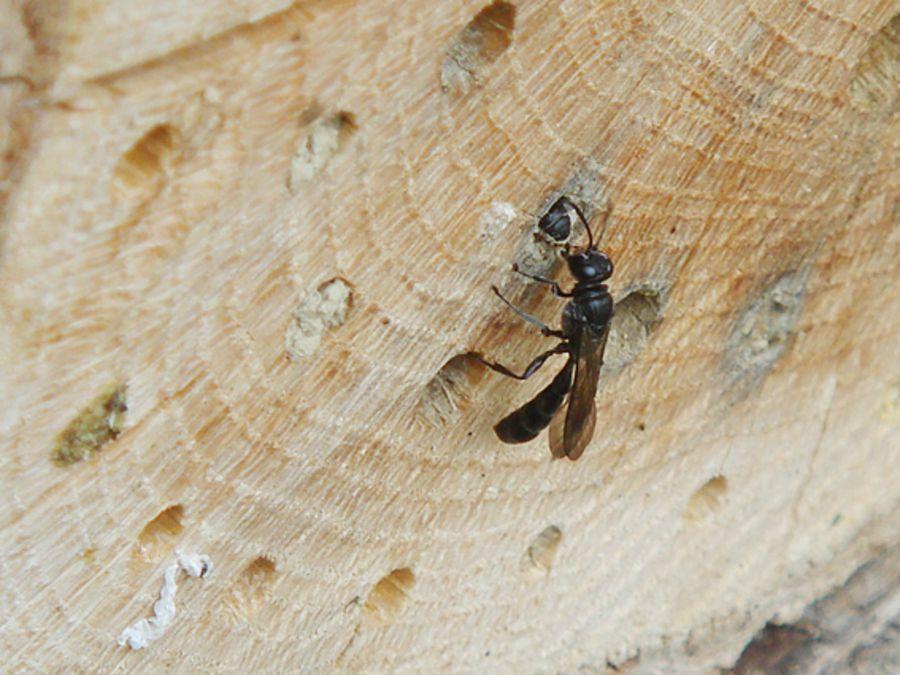 Super Insektenhotel - BUND Naturschutz in Bayern e.V. @FI_42